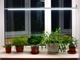 Светодиодные светильники (для растений)